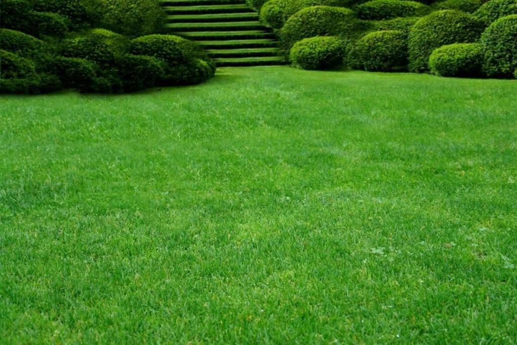 Делаем опрятный газон самостоятельно: типы газонов, выбор, посадка, уход