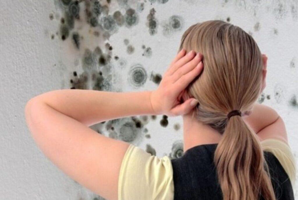 Как избавиться от сырости в доме и в квартире своими руками — лучшие способы устранения сырого запаха