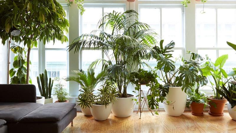 Выращивание домашних растений